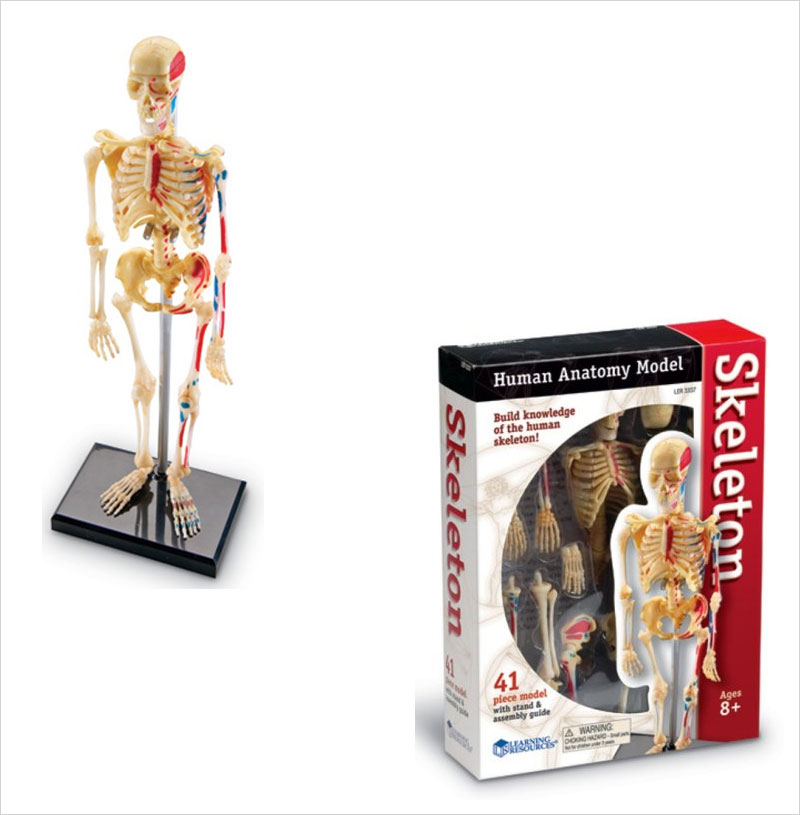 Learning-Resources-Skeleton-Model.jpg120